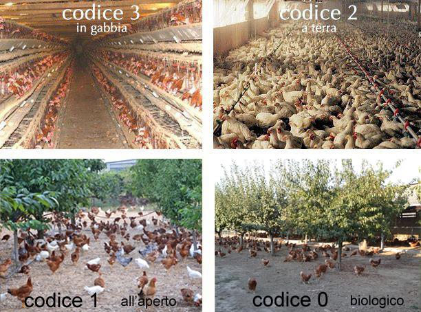 uovo e tipi di allevamento