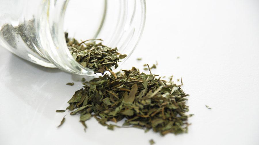 stevia pianta essiccata