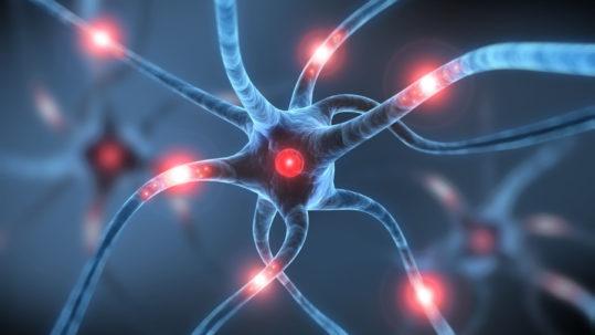 la memoria del gusto attiva precisi segnali neuronali