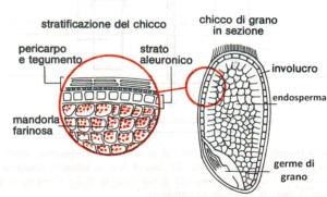 cariosside frumento sana cucina italiana